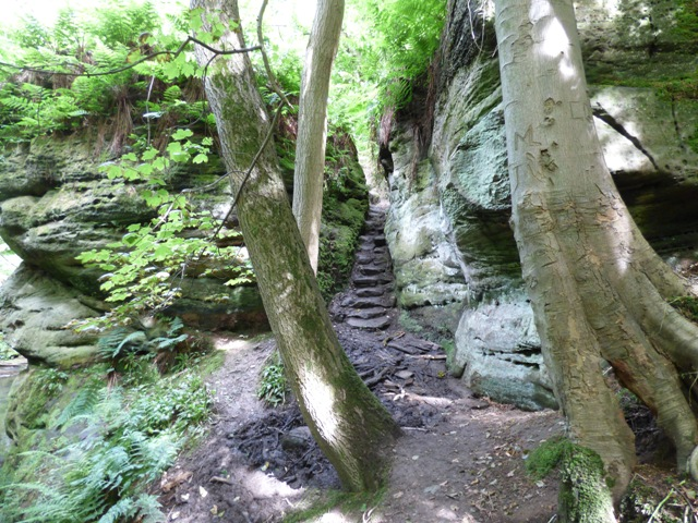 Carved steps down to Dunino Den